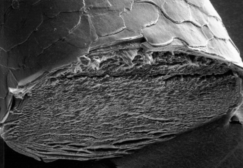 Hair Under Microscope Style