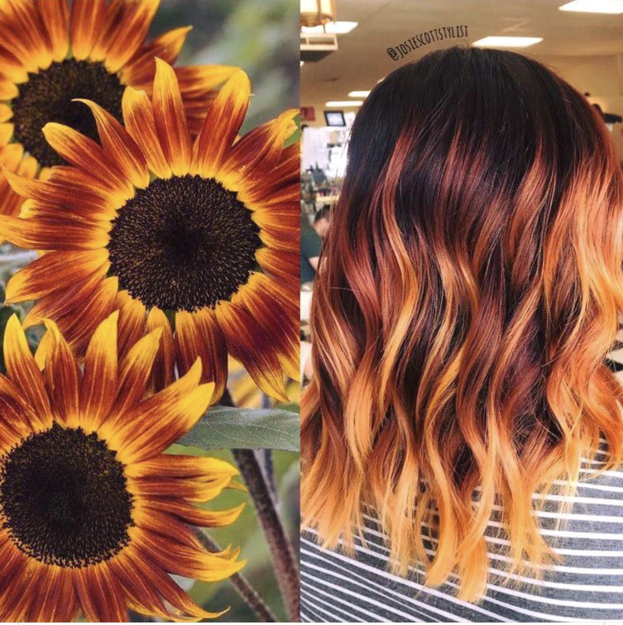 Creating Beautiful Styles With Sunflower Hair Care